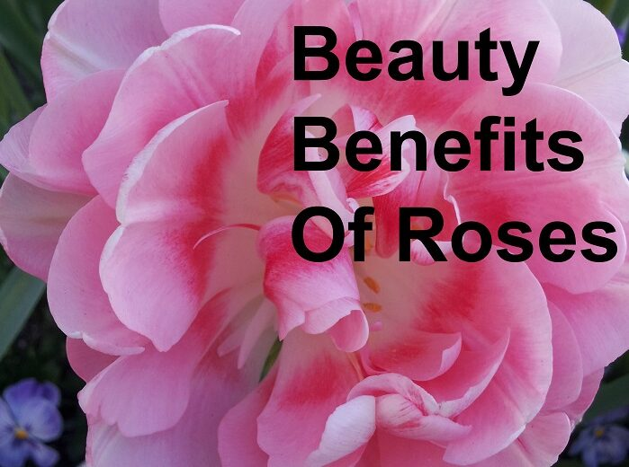 Beauty Benefits Of Roses